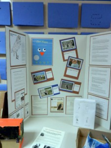 Burrowing owl teaching materials - student project
